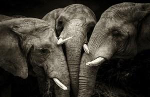Éléphants ou les Mémoires de la Terre