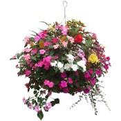 hanging_flower_basket