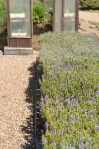 Mudbrick Lavender and Greenhouse