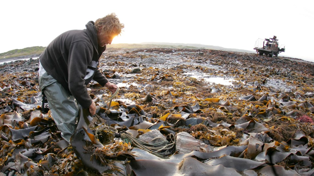 Can Kelp Be Trendy? Farmers Are Betting on It