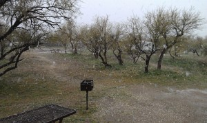 Snow Falling In The Catalina State Park On Valentine's Day