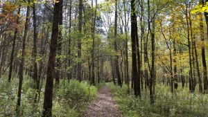 Beautiful Fall Day For A Hike In Mammoth Cave National Park