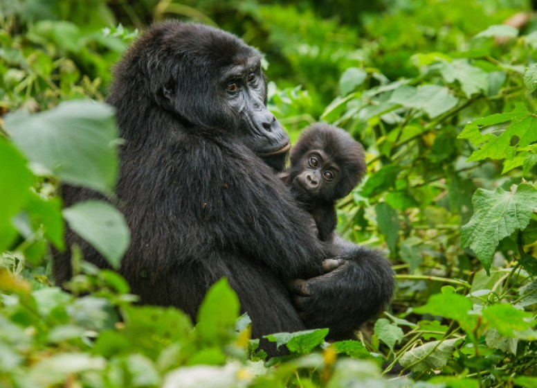 Top Trips for Teenagers - Uganda