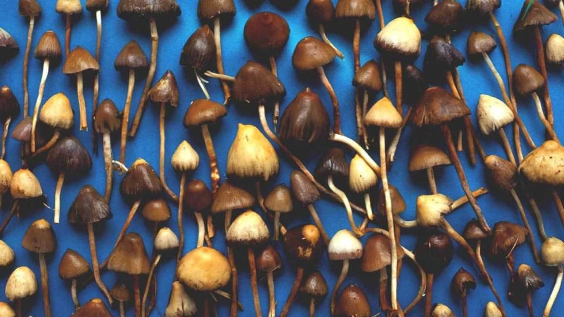 "Psilocybin medical use expected to ""mushroom"""