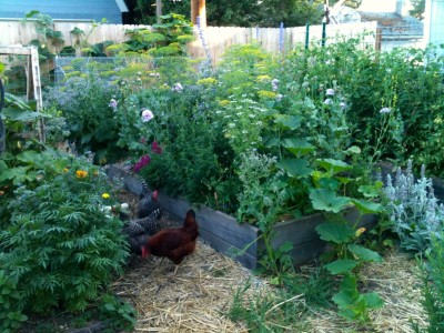 Urban Permaculture: Design Your Own Backyard Oasis | Out ... on Backyard Permaculture Design id=86823