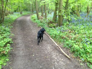 Bredhurst-Woods-Main-Path