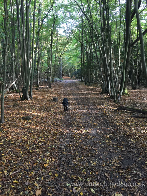 Autumn Woodland Pathway