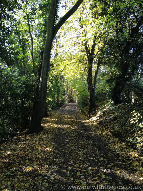 Bredhurst Woods - Woodland Walk