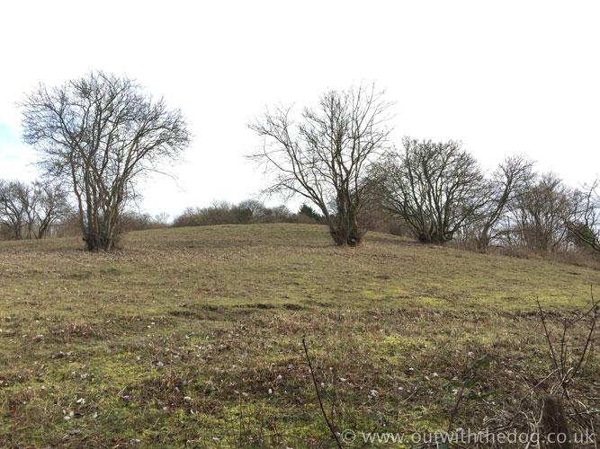 Blue Bell Hill - Grassland