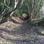 Blue Bell Hill woodland footpath