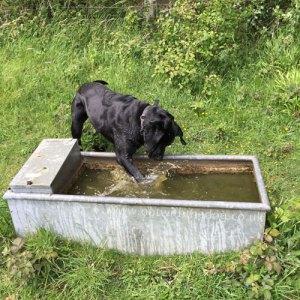 Queendown Warren water trough