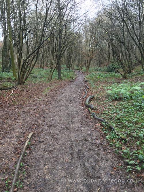 Cossington valley footpath