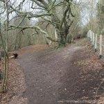 Queendown Warren - Path split