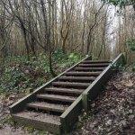 Hucking Woodland Steps