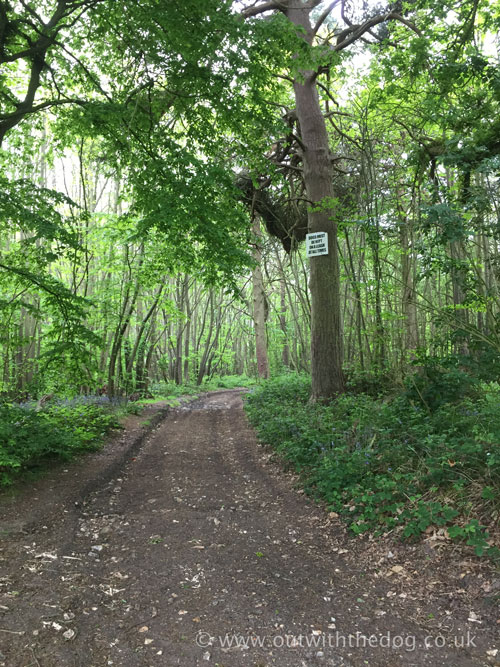 Greatpark wood - Footpath through the woodland.