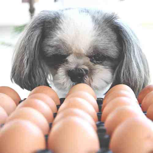 Ovai 45 Dried Egg Product