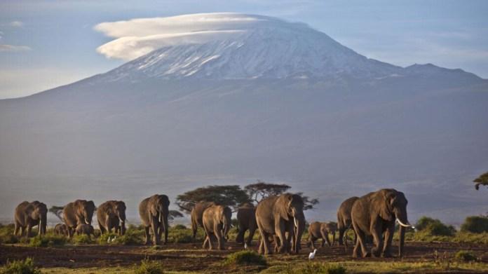 Afrika'nın nadir buzulları yakında yok olacak