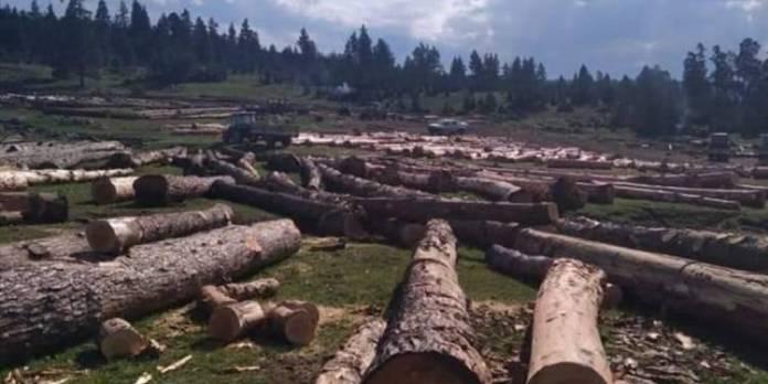Göle'de ağaç kıyımına karşı çıkan köylülere jandarma engeli: Devletin ormanıdır keser