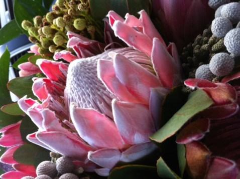Overhaar, wereldkankerdag, darmkanker, blog overhaar daramkanker, protea, suikerbossie, bloemen .. Het hart!