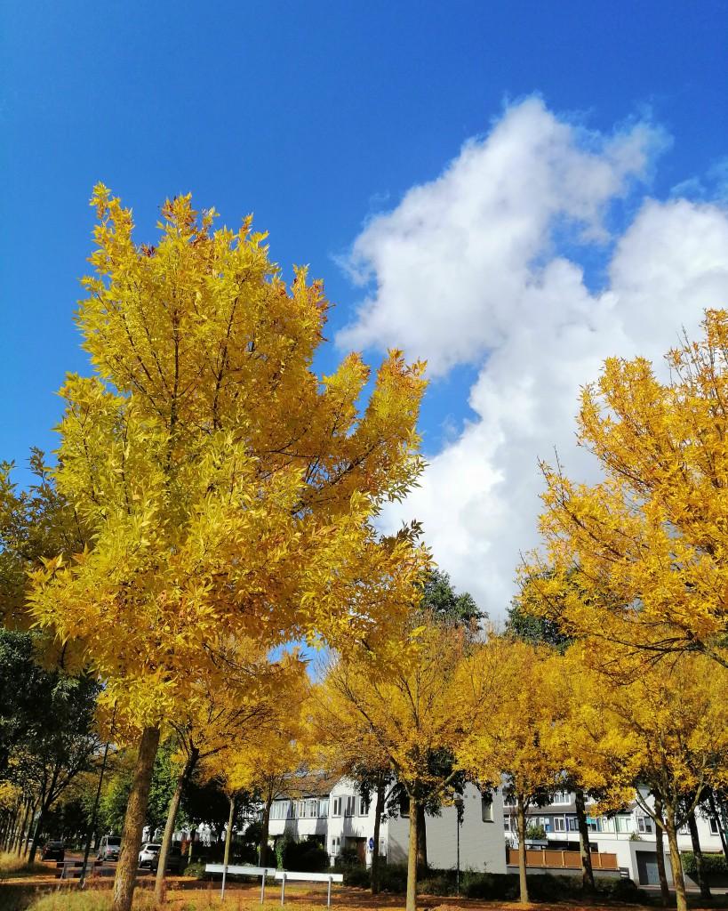 Overgaat Herfst, menslief ik heb u nodig, overhaast blog, autumn blog.