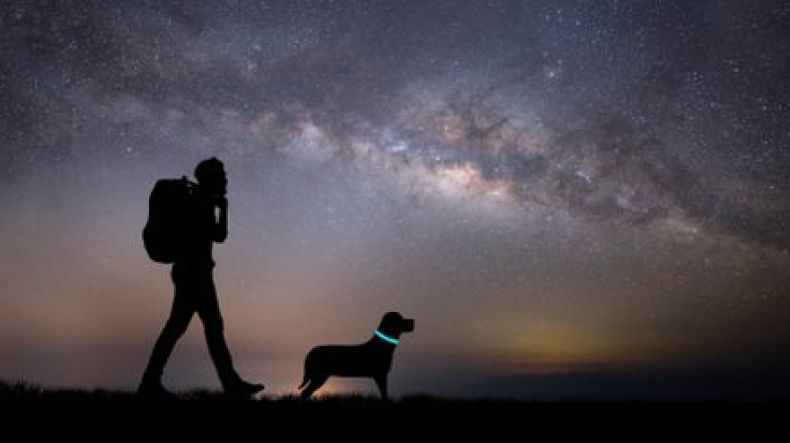 LED safety collar - best camping gear for dogs