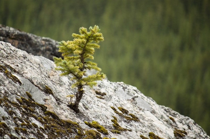 Trees grow in some of the unlikeliest places