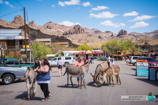 OATMAN-ARIZONA-USA-14