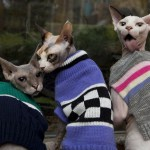 12 Cats in Cardigans!
