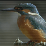 Watch This Kingfisher Hunt Underwater