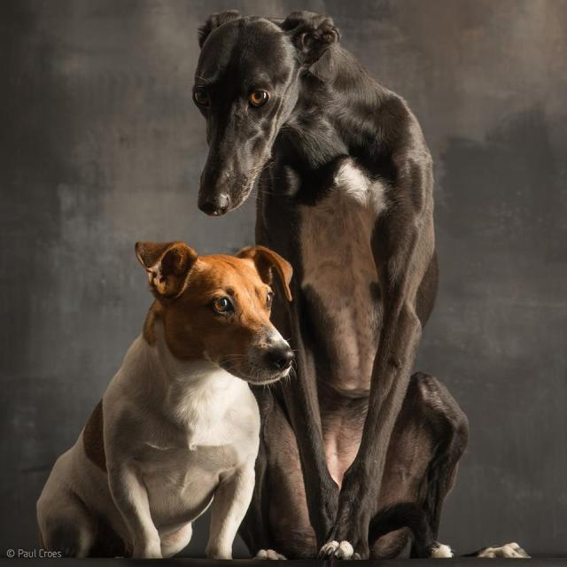 Terrier and Hound