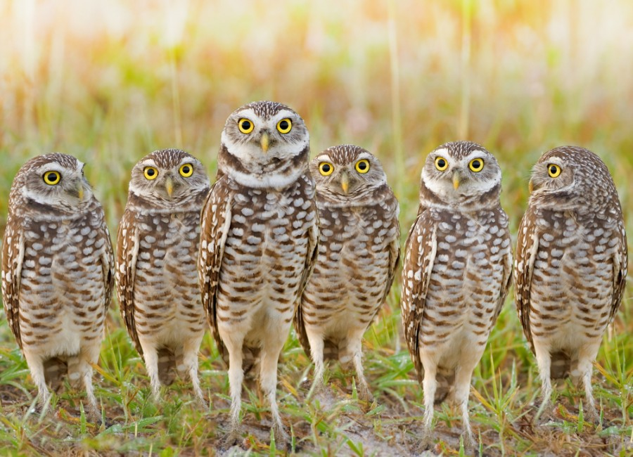 12 Species Of Owls With Striking Faces