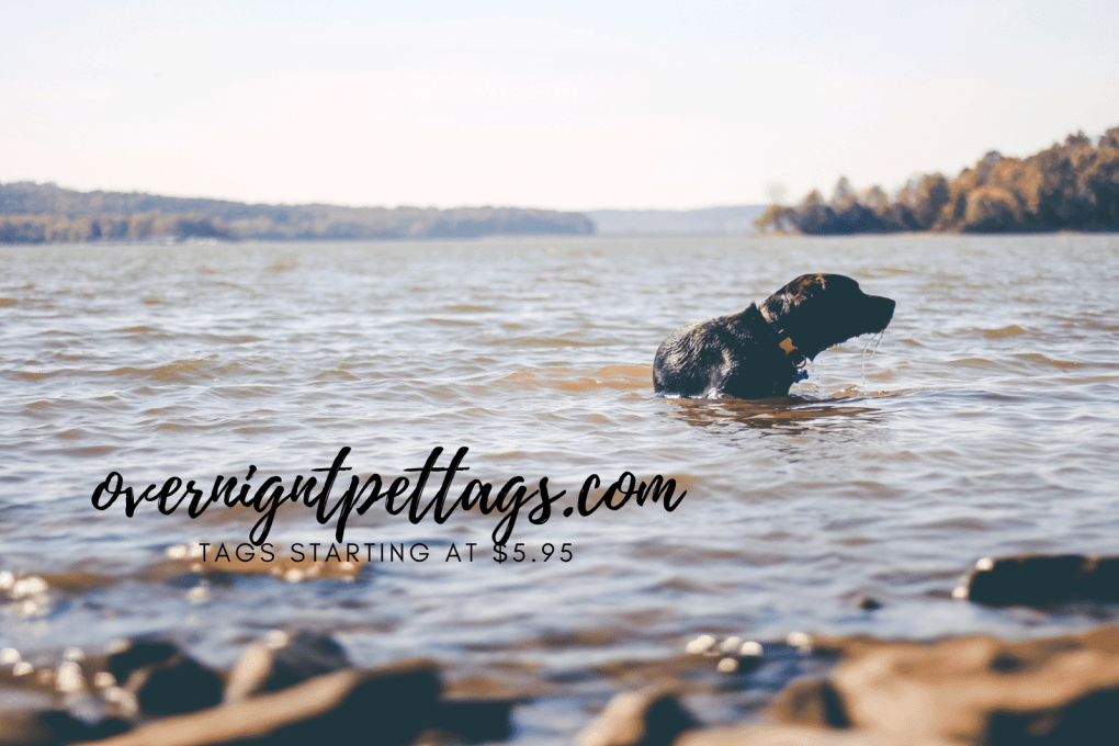 Image of dog in water