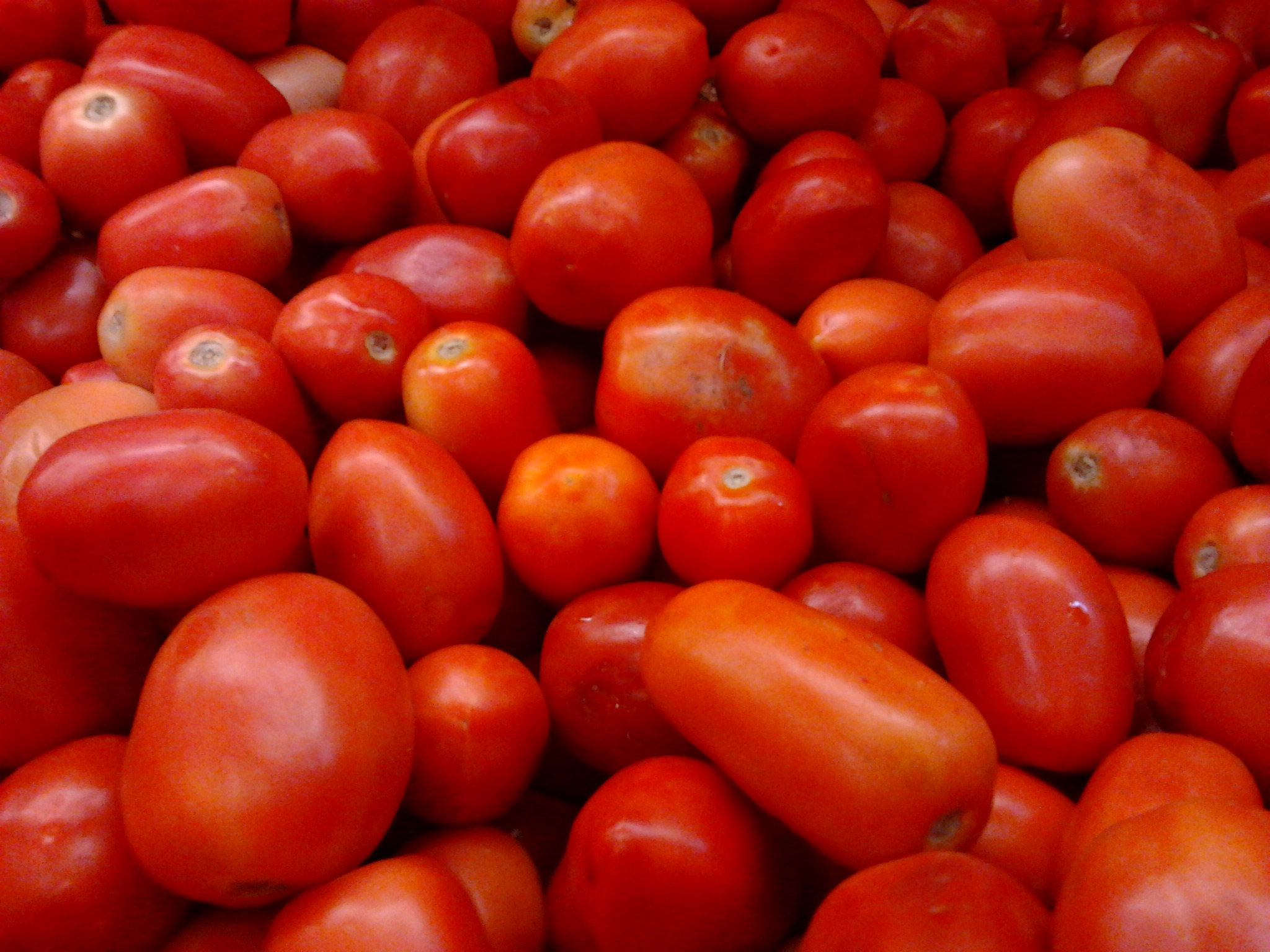 Indian Tomatoes in Pakistan