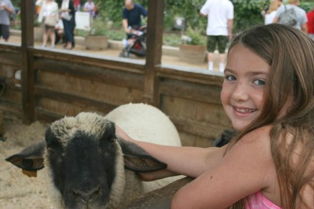 pet a lamb