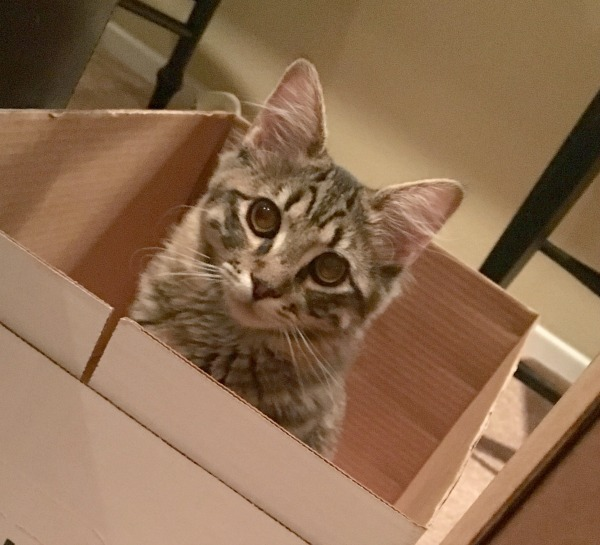 iams-cat-sit-in-another-box