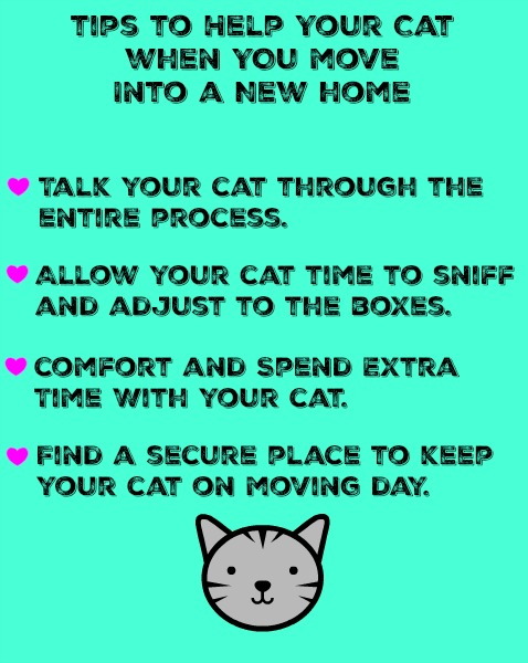 tips-to-help-your-cat