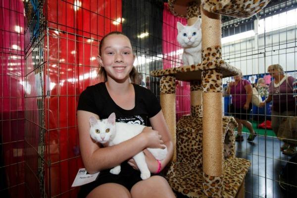 americas-family-pet-expo-cat-area