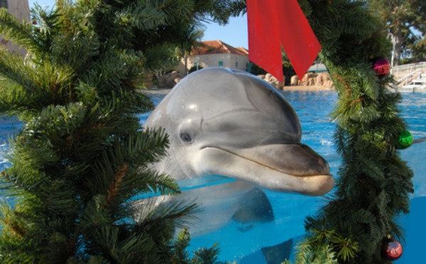 seaworld-dolphin-island-christmas