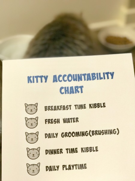 tips-for-teaching-your-child-to-be-a-responsible-cat-owner-3