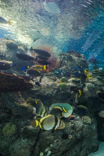 aquarium-of-the-pacific-tropical-pacific-gallery