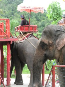 olifant rit