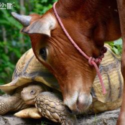 Bijzondere liefde tussen twee dieren