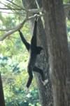 friends of wildlife thailand