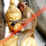 monkey loves Buddha at Khao Takiab hua hin