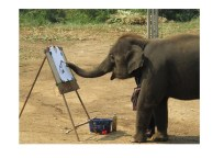grappige thai olifant