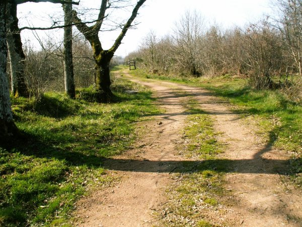 Property for Sale in Availles-Limouzine, Poitou-Charentes, France
