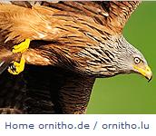 Ornitho.de