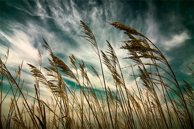 wind01_400