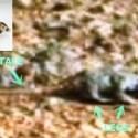 Criatura marciana e capacete...ou pareidolia? 37