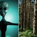 O OVNI de Rendlesham era de outro mundo, acredita ex-investigador do governo britânico 12